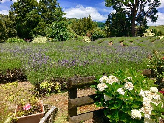 Taumarunui, New Zealand: photo2.jpg