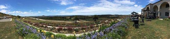 Carrington Resort: photo1.jpg