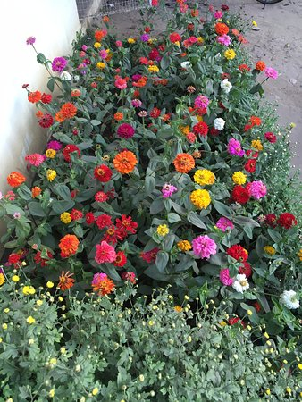 Eco Tourism Park: Zinnia Flower Beds