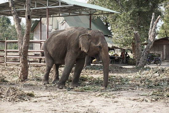 Elephant Stay Royal Elephant Kraal and Village