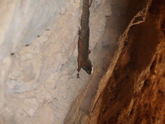 Anthousa, Greece: lizard