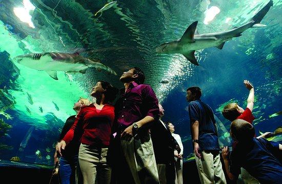 Holiday Inn Cincinnati Riverfront: Nearby Newport Aquarium