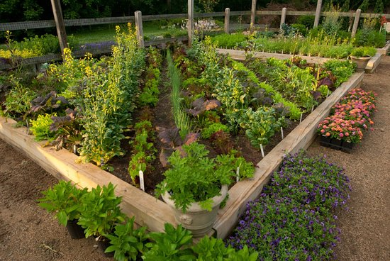 Keswick, VA: Chefs Garden Box
