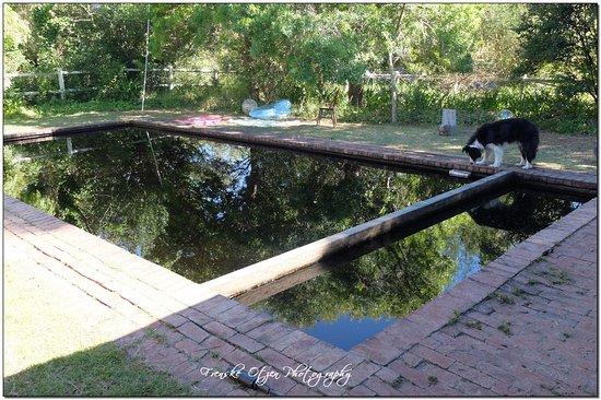 Honeywood Farm: cool refreshing mountain pool