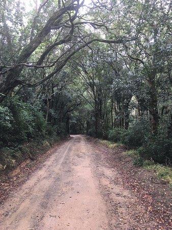Heidelberg, Afrique du Sud : Vehicle track on the reserve