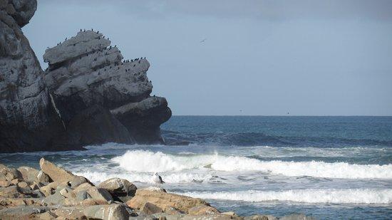 Morro Bay, CA: Más vistas desde el Morro, ahí la gente hace surf