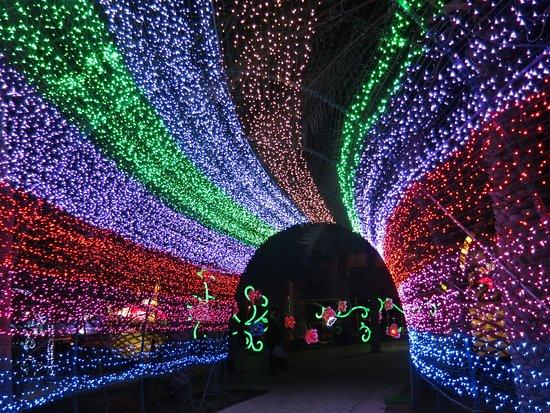 Dubai Garden Glow: Ceiling Of Coloured Lights