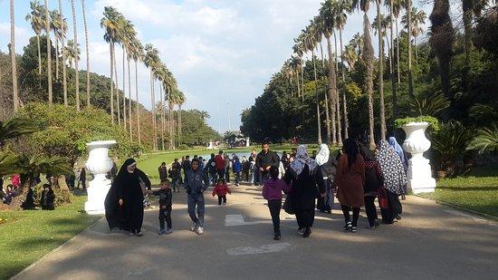 Algiers, Cezayir: Le Jardin d'Essai du Hamma