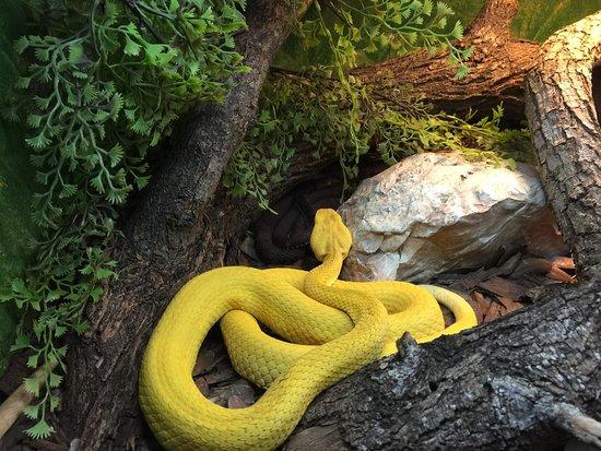 Gladys Porter Zoo: photo1.jpg