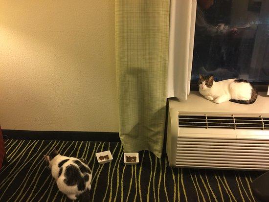 Hampton Inn Columbia-I-26 Harbison Boulevard: Happy kitties on the 6th floor