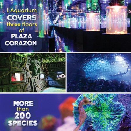 L'Aquarium Playa del Carmen