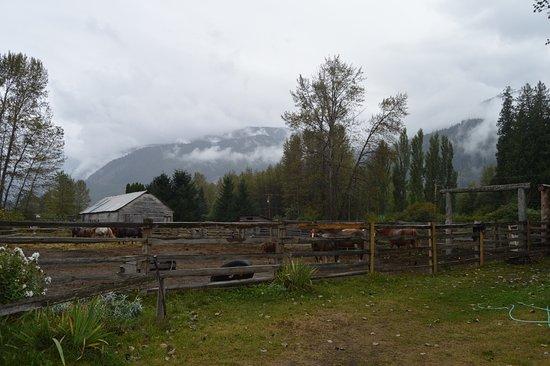 Pemberton, Canada: Back at the ranch