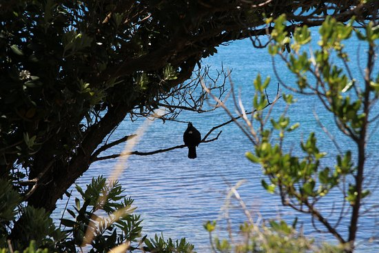 Paraparaumu, New Zealand: A Tui