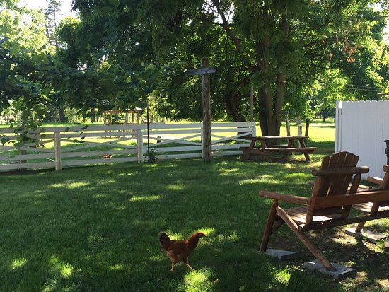 Stanley, VA: Pretty yard
