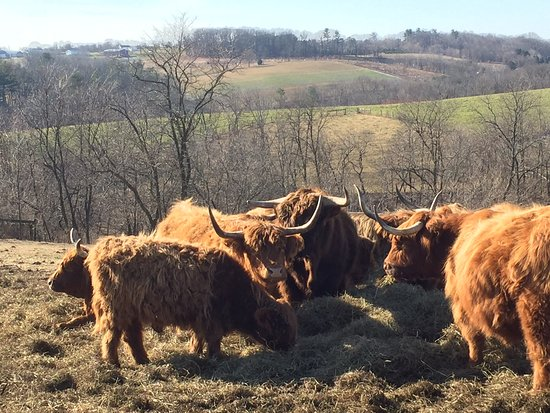 Fogelsville, PA: On Property Cows and Pasture