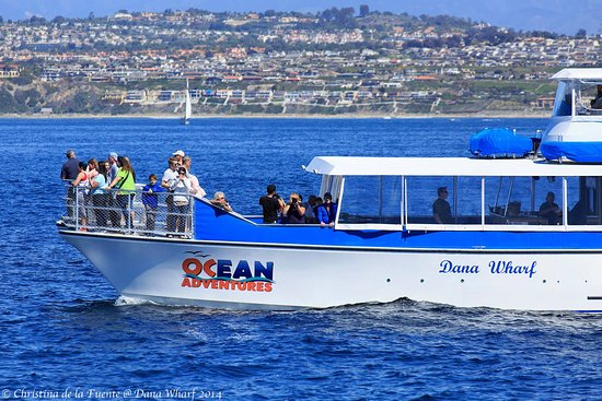 Dana Point is the whale watching capital of the world