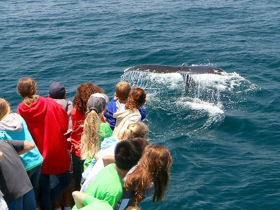 "Dana Point, CA: Children gawk as a whale waves ""hello"" on an Ocean Institute educational day on the water."