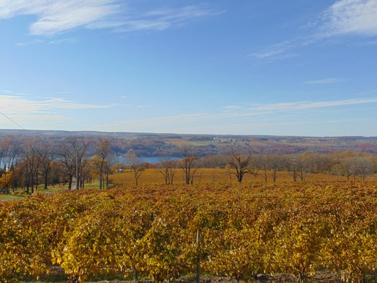 Hector, NY: Harvest Time, Great vineyard view from our front decks !