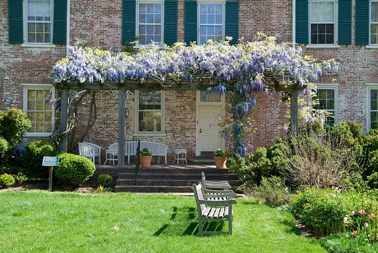 Morristown, NJ: Our wisteria in full bloom, photo courtesy of Stan Freeny