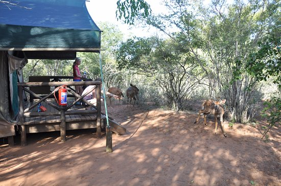Mkuze Game Reserve Photo