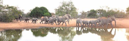 Mkuze Game Reserve, South Africa: dorst