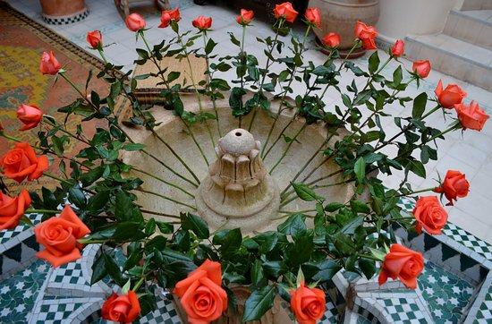 Riad Maison Belbaraka: these beautiful roses are real!!!!