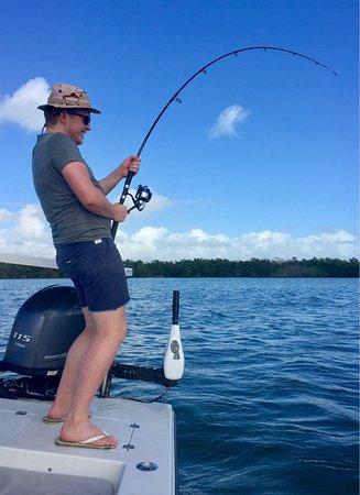 Tavernier, FL: 80 lb lemon shark.