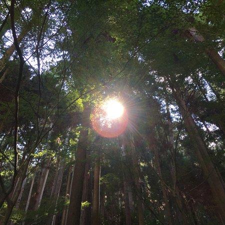 Foto de Prefactura de Kyoto