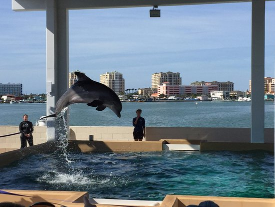 Clearwater Marine Aquarium : dolphin jumping