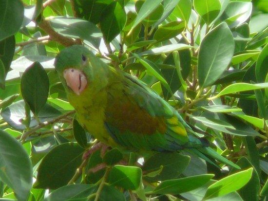 Portobelo, Panama: Wildlife in the garden
