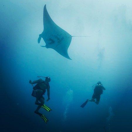 Palau Dive Adventures Photo