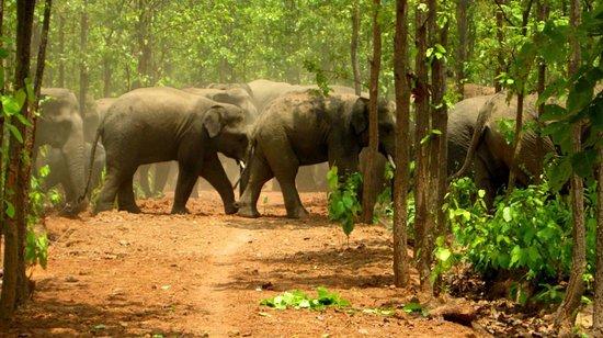 Jamshedpur, Indien: Dalma Wildlife Sanctuary