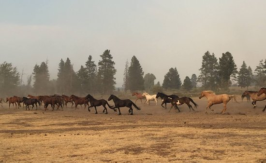 Triangle X Ranch: Wranglers leading horses to the pasture after a day of riding