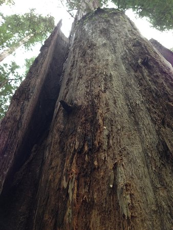 Weott, CA: Leaning on an elder