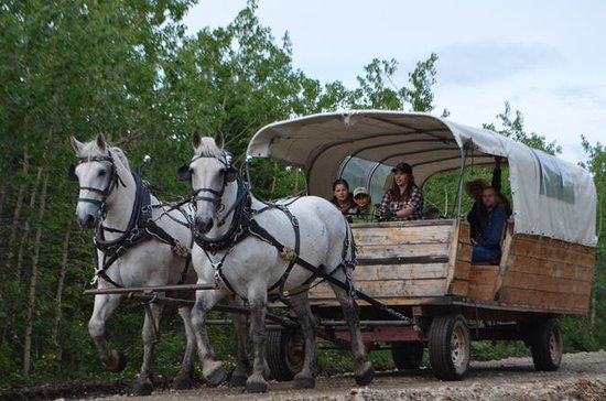 Horse-Drawn Covered Wagon Ride with...