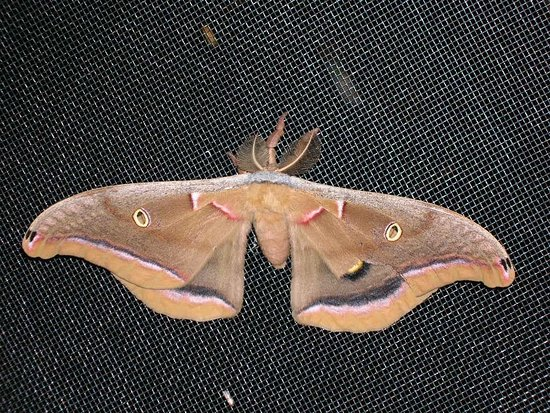 WildAcres Retreat: A butterfly/moth?