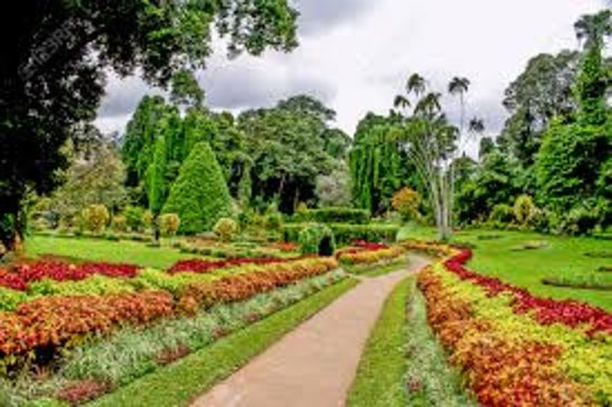 Botanical Garden Peradeniya - Picture of Royal Botanical Gardens ...