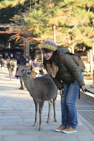 Kinki, Japan: chit chat with the deer