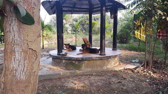 Baul monn santiniketan west bengal guesthouse reviews photos tripadvisor for Resorts in santiniketan with swimming pool