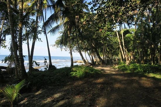 Cocles, Costa Rica: photo5.jpg