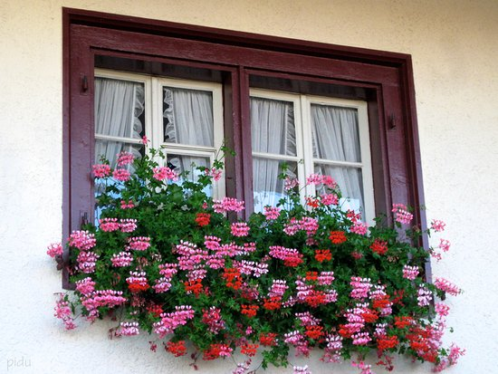 Schönes Blumenfenster im Dorfkern Dietlikon