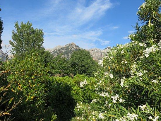 Finca Ca's Sant: Wunderschöner parkähnlicher Garten mit Blick auf das Tramuntana Gebirge