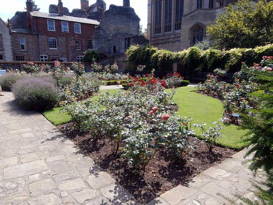 Bury St. Edmunds, UK: the rose garden