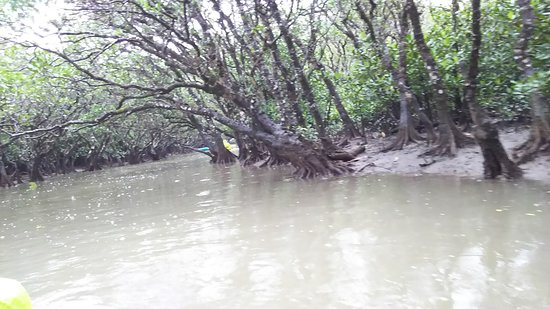 Mangrove Forested Area: DSC_0210_large.jpg