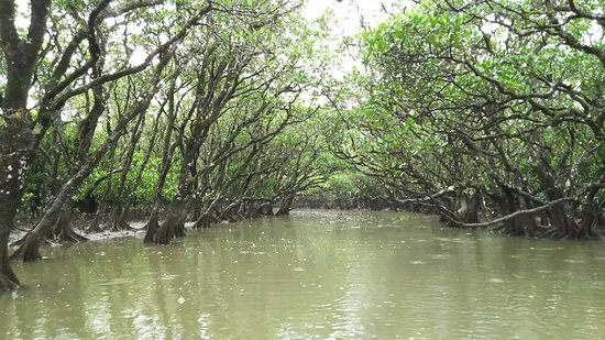 Mangrove Forested Area: DSC_0218_large.jpg