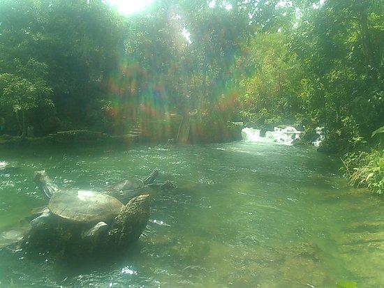 Centro Turistico Naciente del Río Tio Yacu ภาพถ่าย