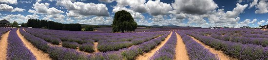 Tasmania, أستراليا: photo3.jpg