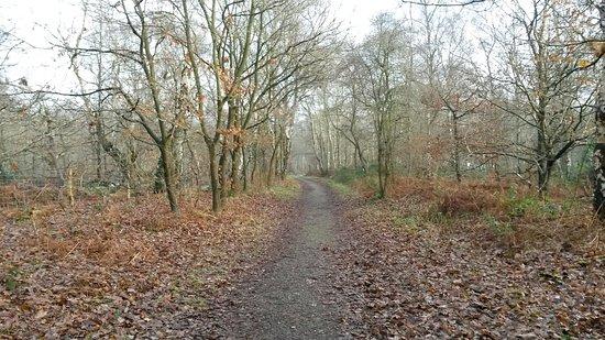 Nottinghamshire, UK: 20161230_124903_large.jpg