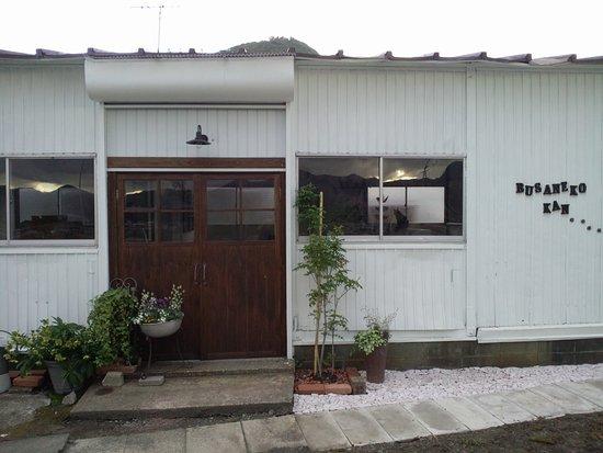Kaminoyama, Japón: ブサ猫館