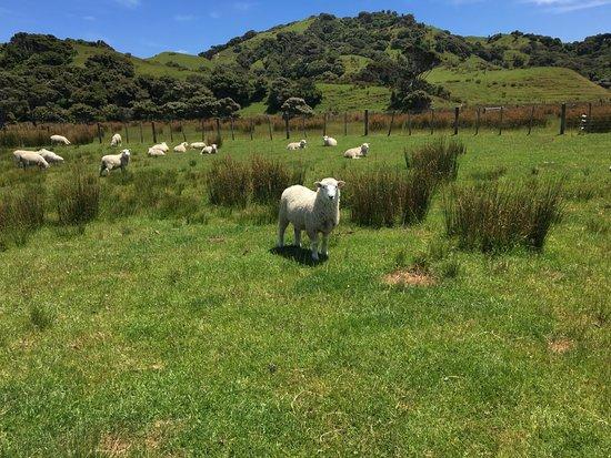 Golden Bay, Nya Zeeland: 19th